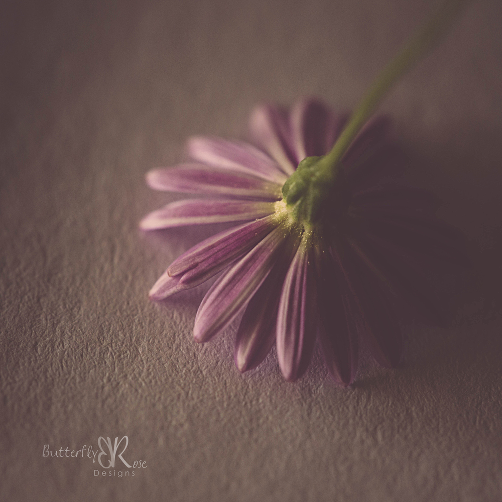 Canon 5D III, Canon 100mm f/2.8L macro, 1/60 seconds, f/5.6, ISO 1600