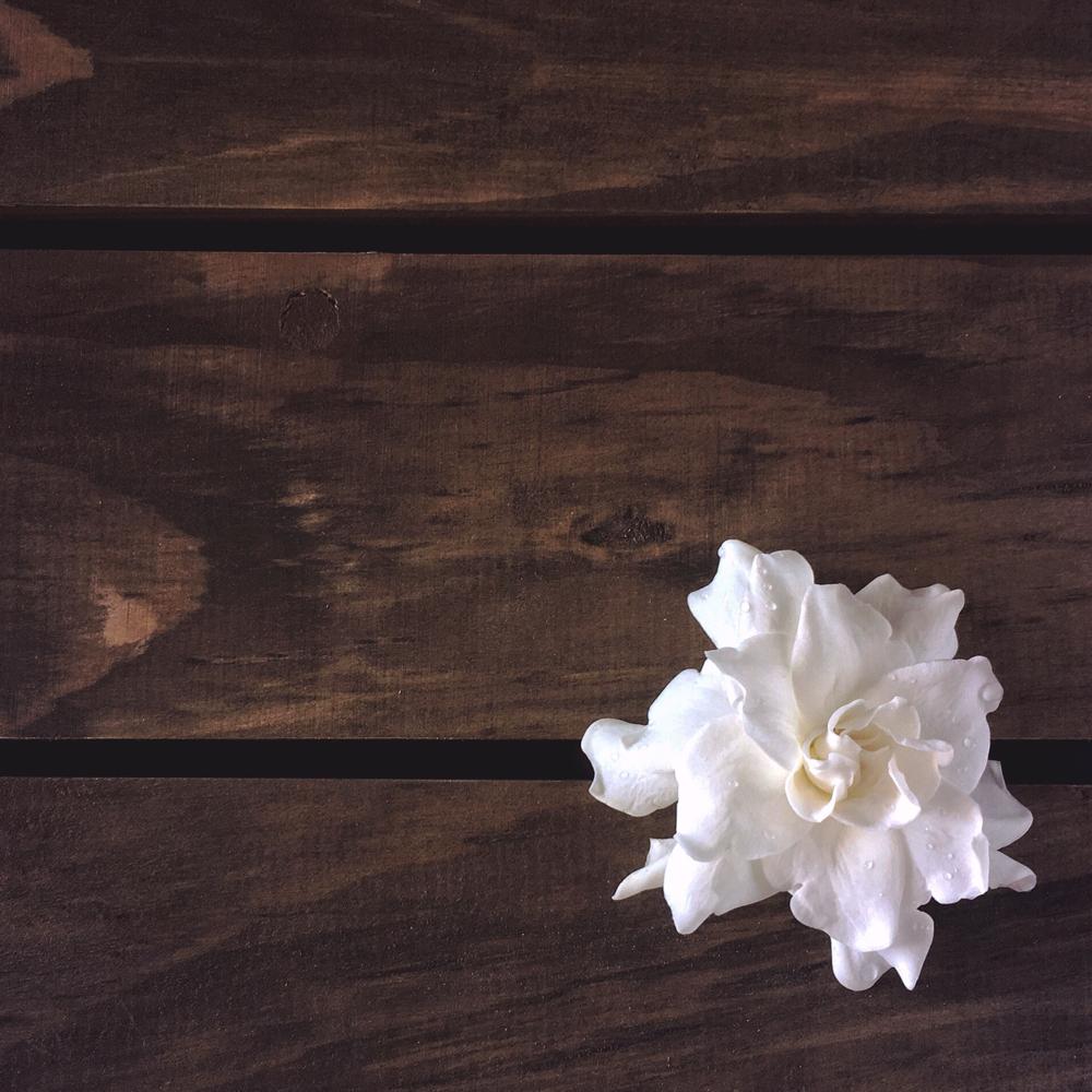 iPhone SE  |  Snapseed