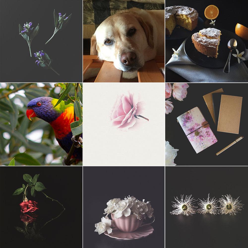 Butterfly Rose Designs Top Nine November
