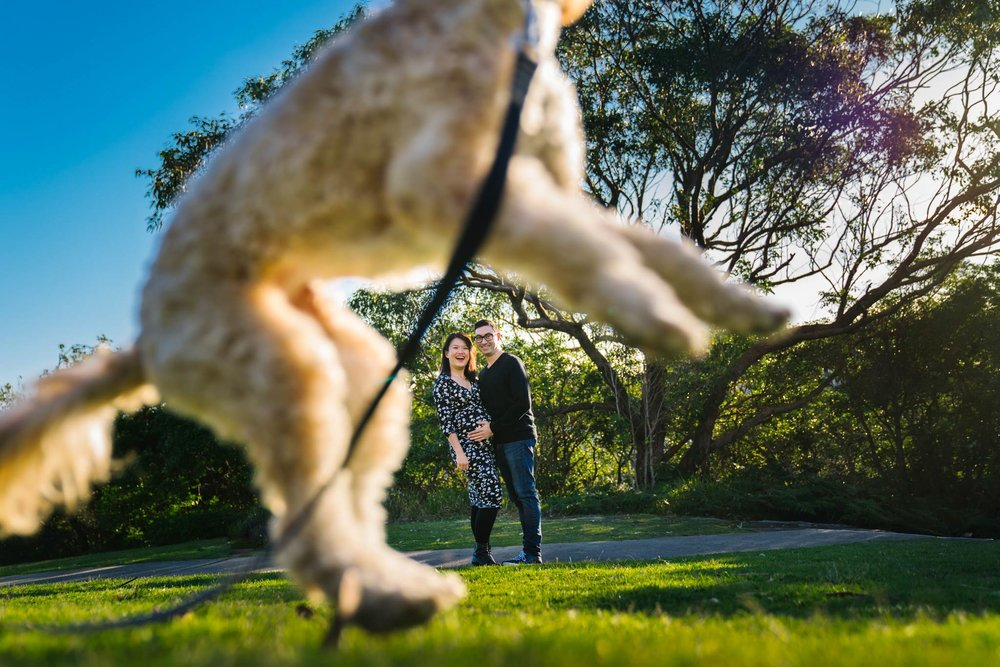 Puppy jumping and making pregnant couple laugh during Northern Beaches maternity session