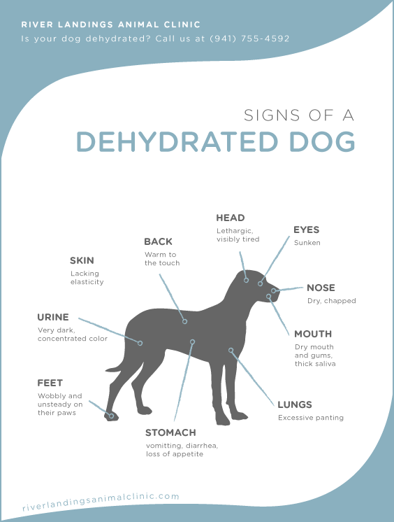 How to Keep a Dog Hydrated forecasting