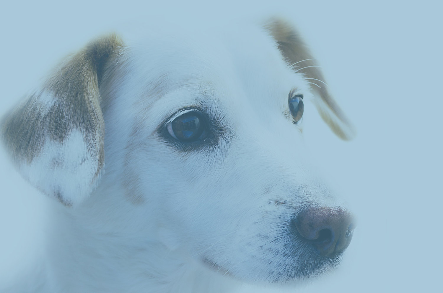 Common Eye Problems in Dogs — River Landings Animal Clinic in ...