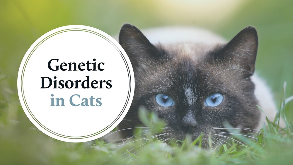 blog-genetic-disorders-in-cats.jpg