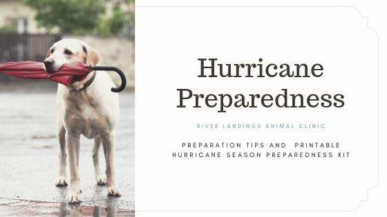 blog_Hurricane Season Preparedness_banner.png