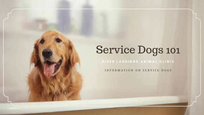 blog_servicedogs101_banner.png