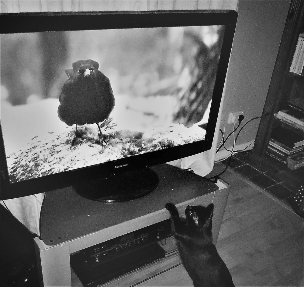 No Fox because this cat only likes good tv