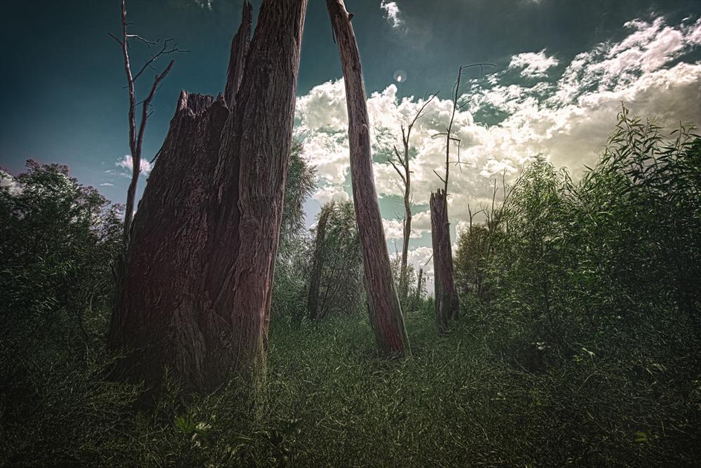 darktrees1200.jpg