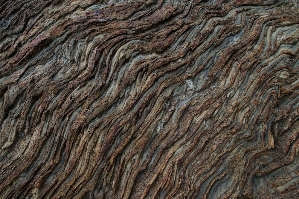 2015-0067-0200.  Tree bark, Sierra National Forest, California.   Purchase this pair of prints.
