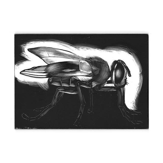"2nd Fly Study 2018 5"" x 7"" Scratchboard  First attempt at ""real scratchboard."" Definitely something I'll be adding to my arsenal.  #lukewohlgemuth #illustration #SVANYC #NYC #art #illustrationartists #illustratorsoninstagram #mfaillustration"