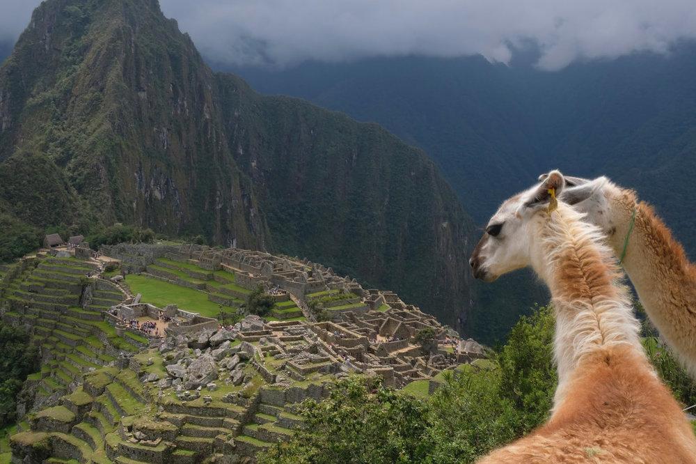 Llamas over Machu Picchu.