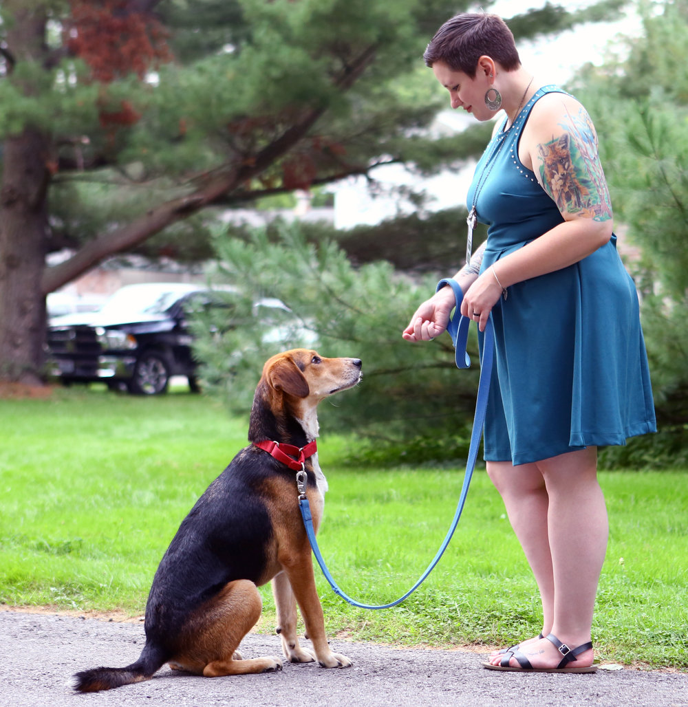 Toledo Area Humane Society intern Kelsey Ravin holds a treat for patiently awaiting plotthound mix Ace during the 4th annual PawVillion fundraiser for the Toledo Area Humane Society held at the residence of Allen and Susan Allen Block in Sylvania on Friday, Sept. 23, 2016.