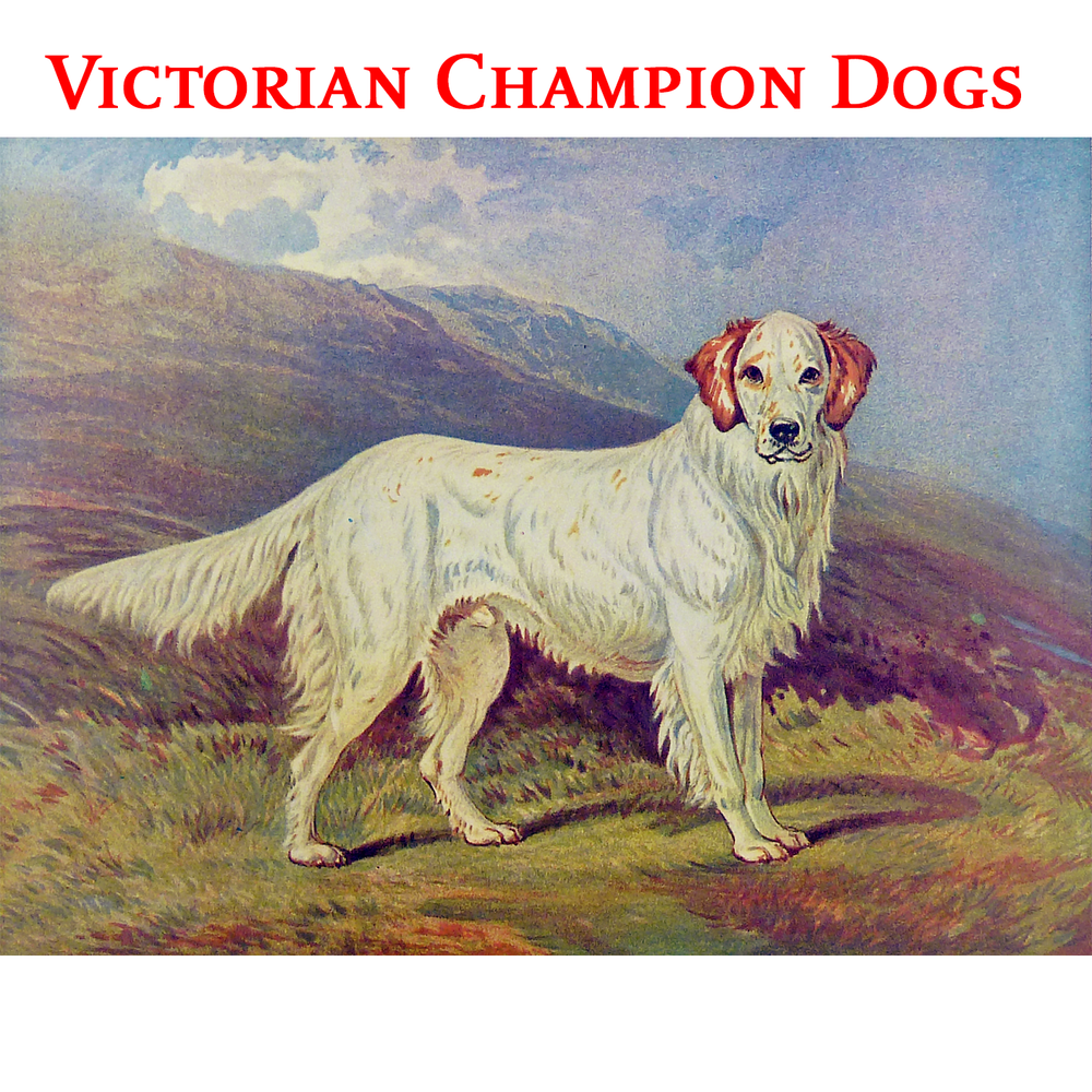 Victorian Champion Dogs.png