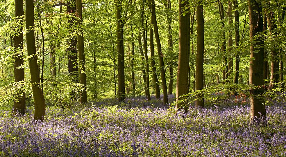 Nottinghamshire 22.jpg