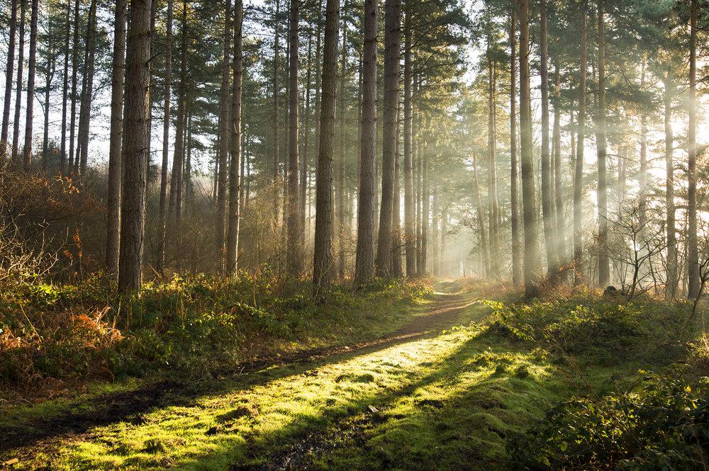Nottinghamshire 24.jpg