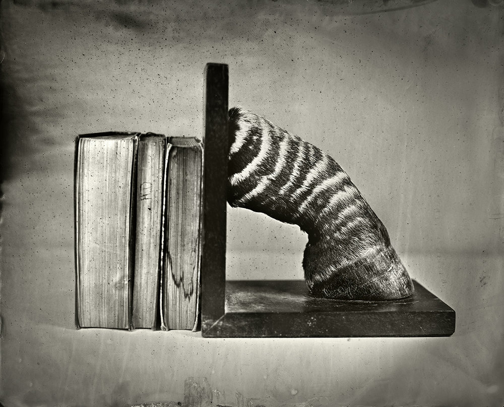Zebra Bookend, 2018