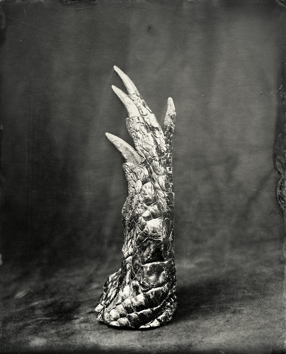 Crocodile Claw, 2018