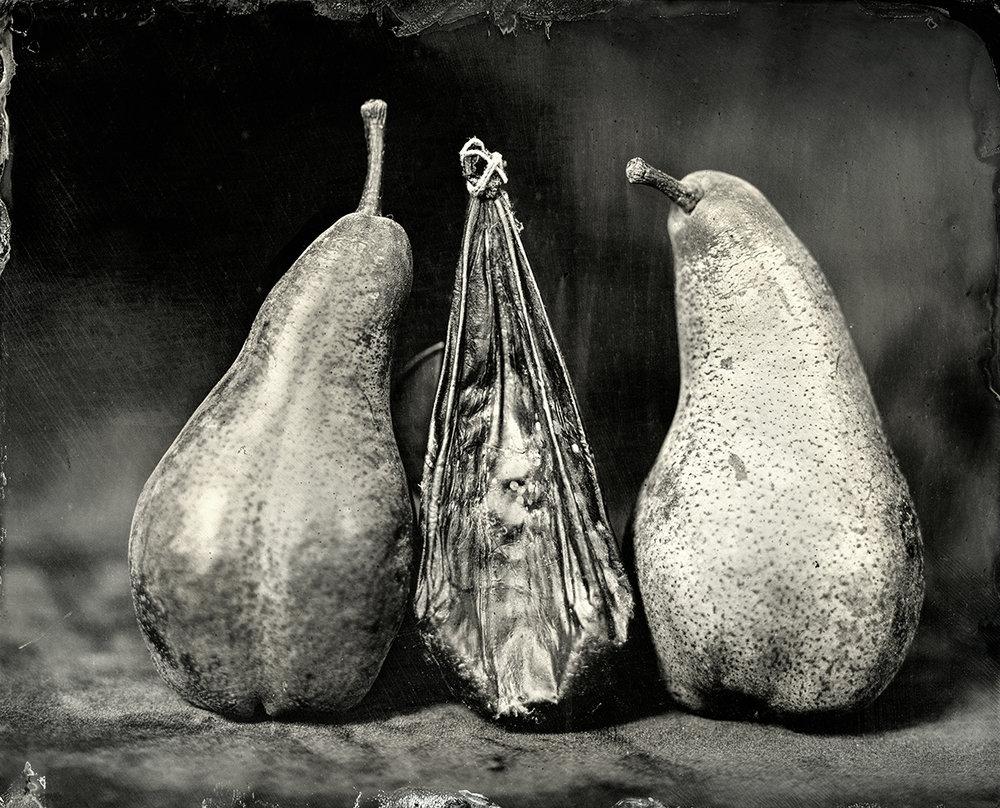 Bear Gallbladder with Bosc Pears, 2018
