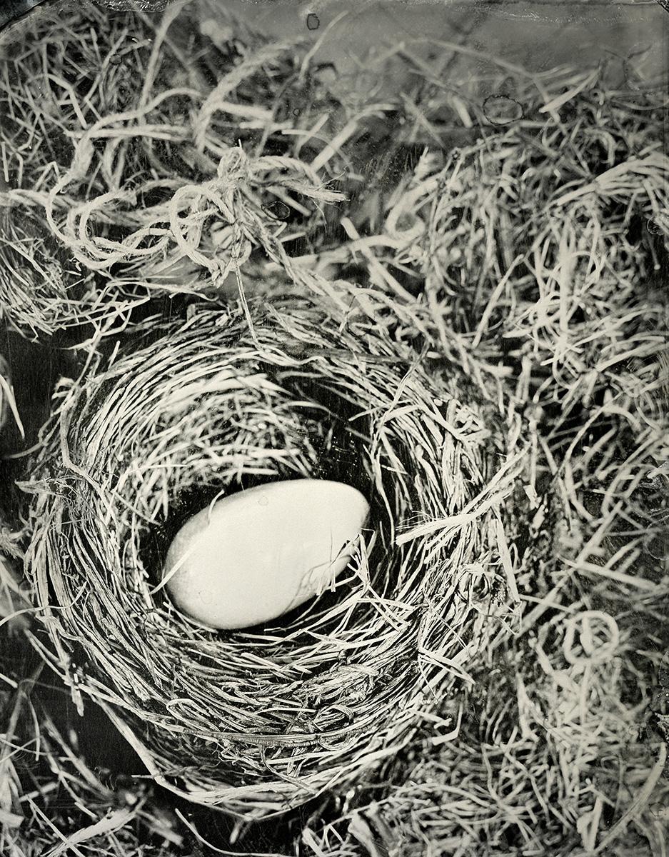 Ivory Egg in Nest, 2018