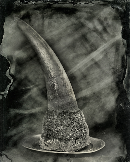 Rhino Horn on Plate, 2018