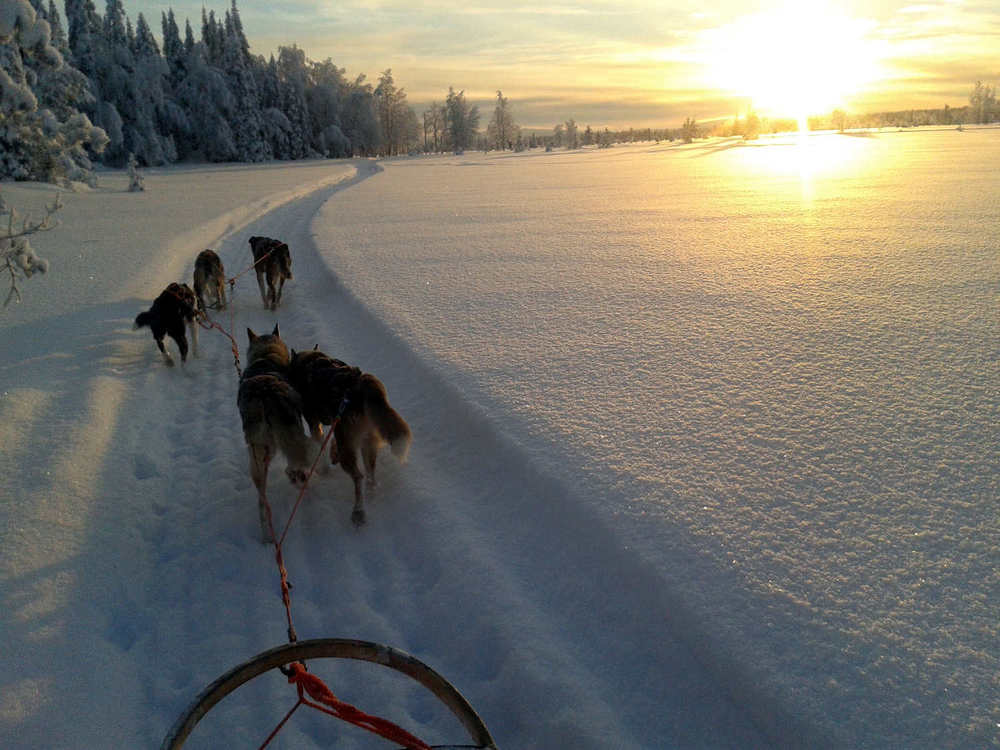 Husky Safari Lapland Retreat