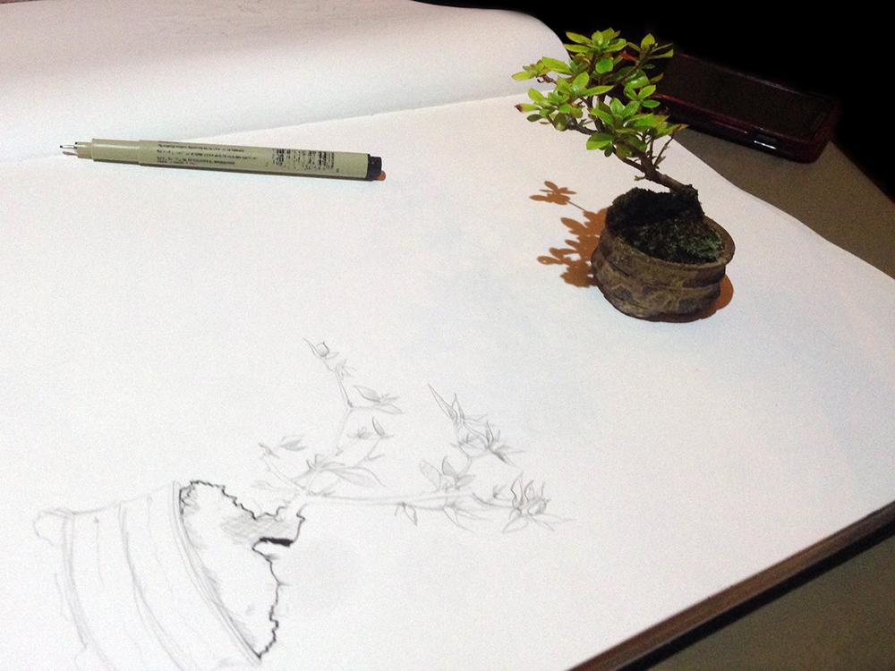 4 plant2.JPG