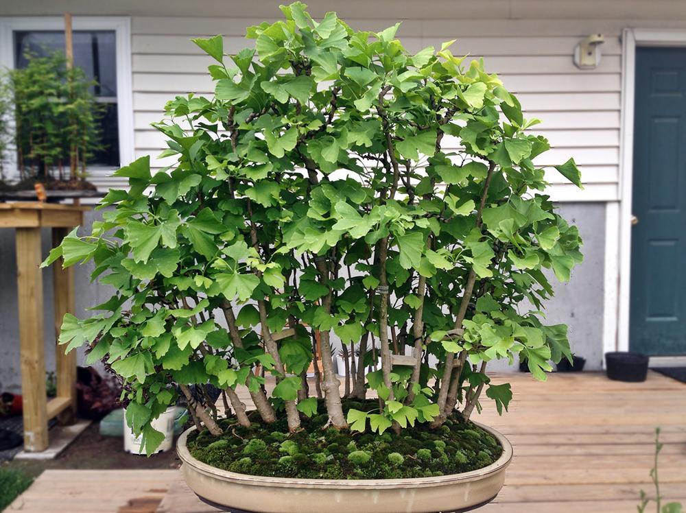 5 plant1.JPG