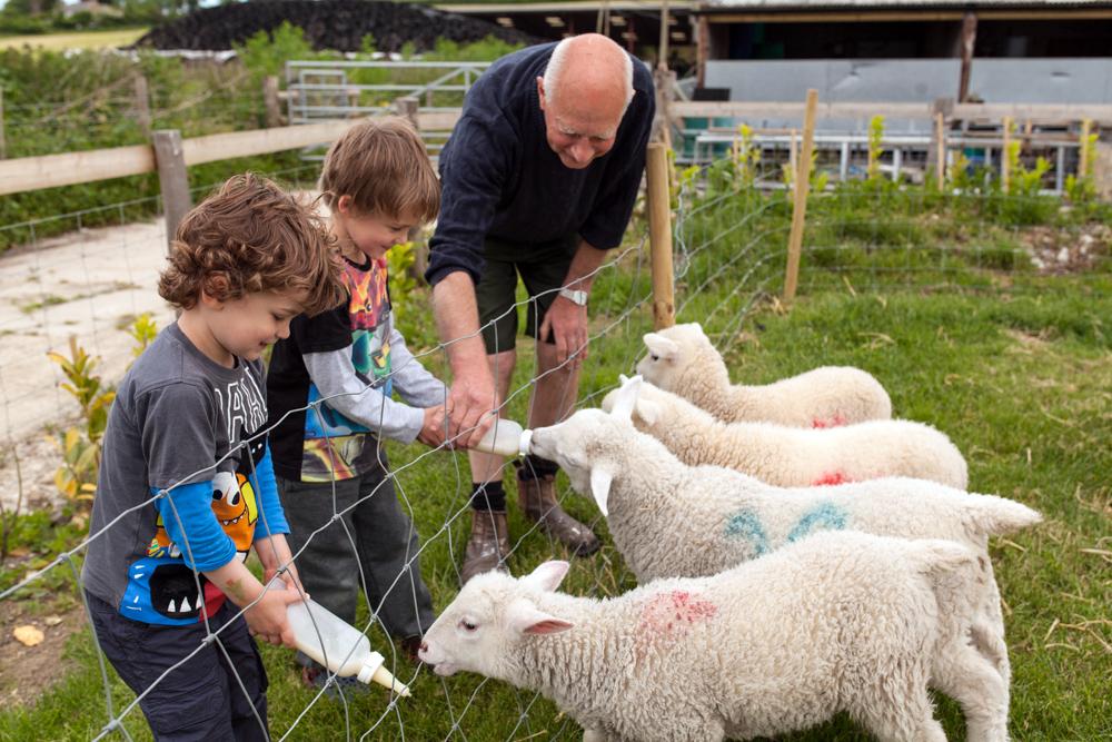 Feeding lambs 1.jpg