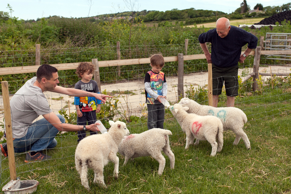 Feeding lambs 2.jpg