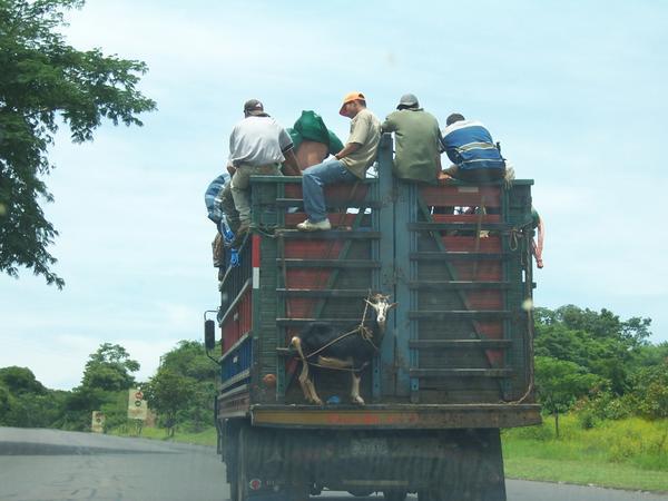 goat truck.jpg