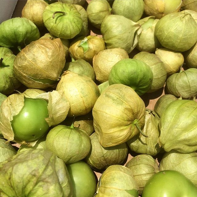 Check these pups out. Tomatillos just came in from @inglewoodfarm and we can't wait to dig in! #eatlocalchallenge #eatlocal