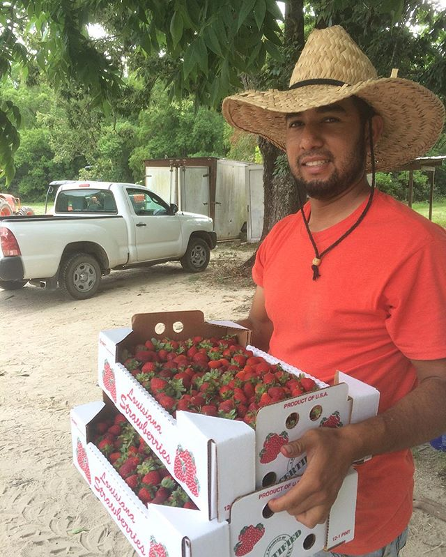 Strawberry season is pretty much done for, come get the last of the sweet berries while you can! #eatlocalchallenge #Nola #FeketeFarms