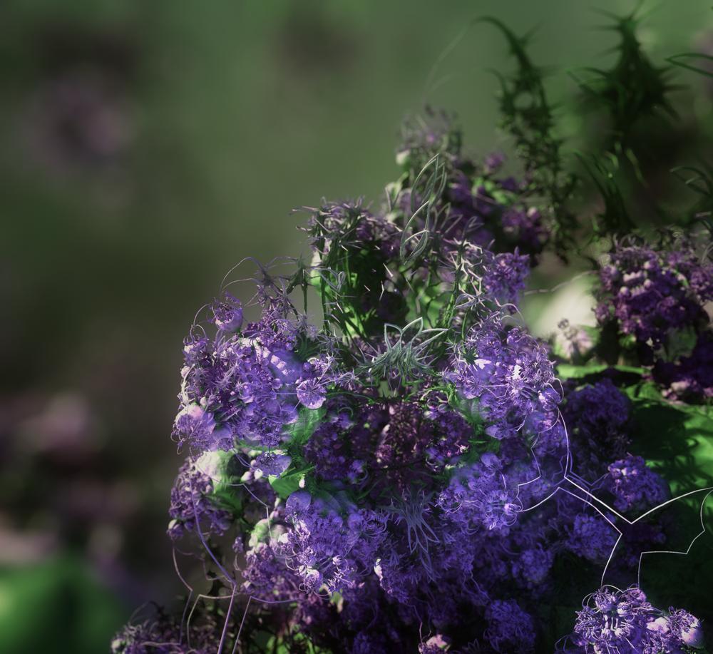 Lavender 1920x1760