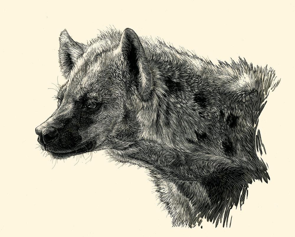 hyena_sm.jpg
