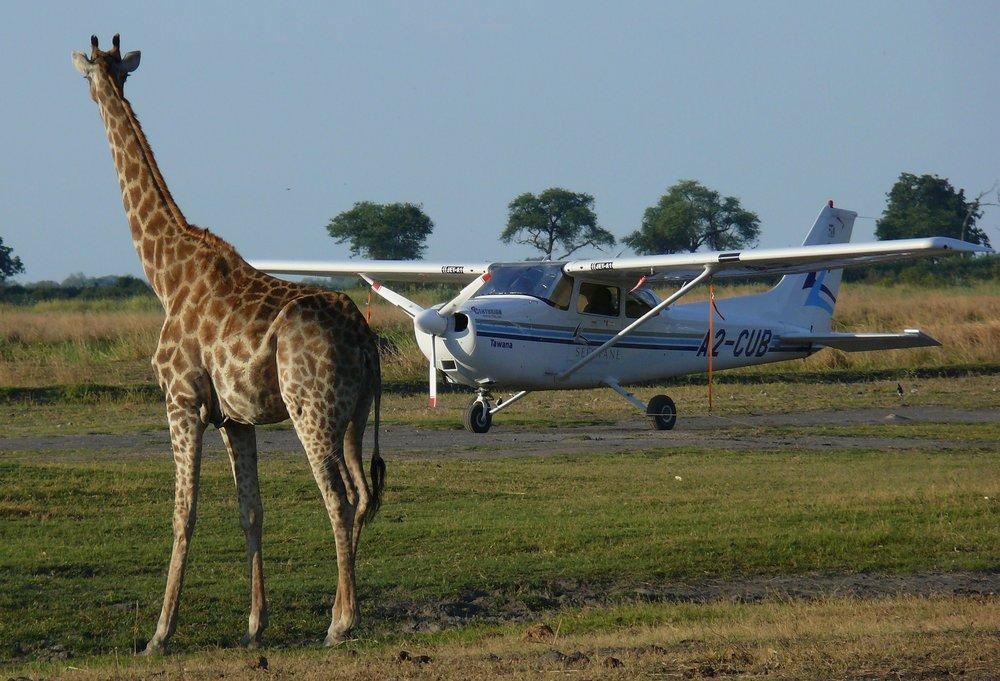 Gordon_C_W_446_Kingspool Camp Botswana 153.jpg