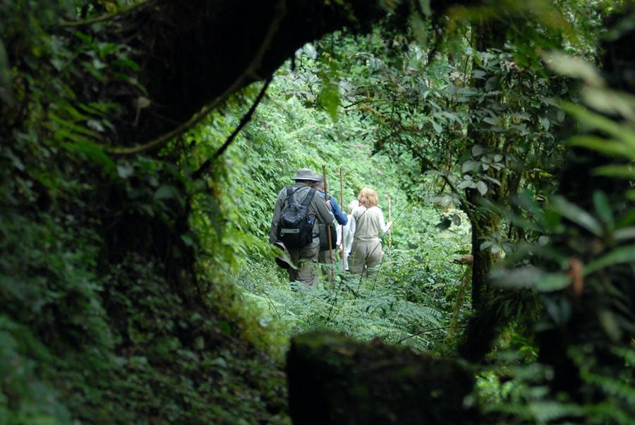 virunga-lodge-trekking.jpg