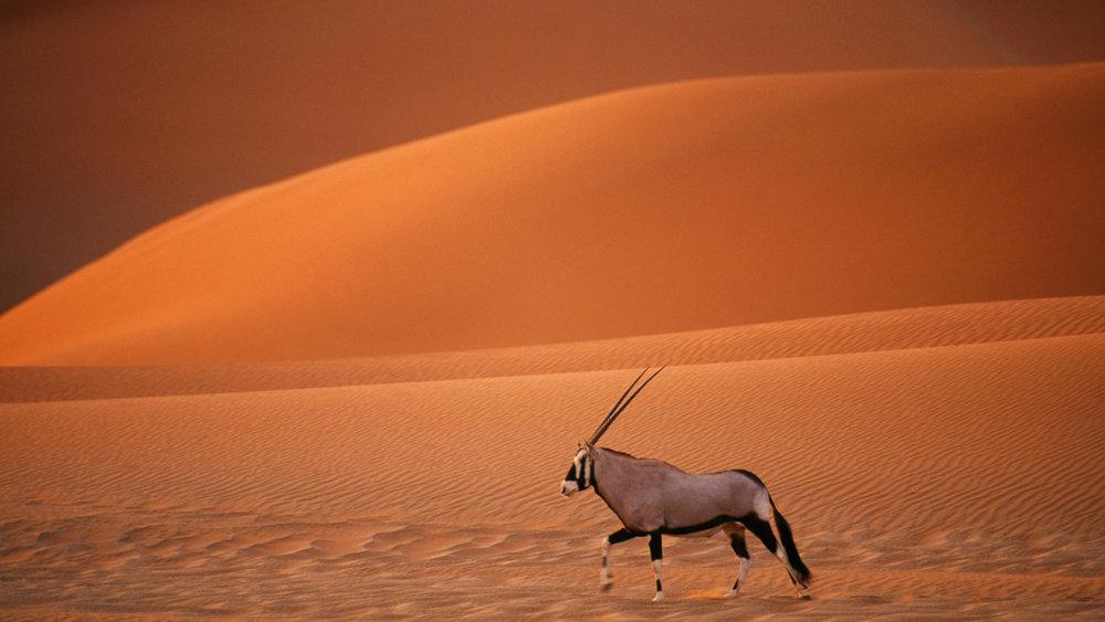 namibia-dunes-rhinos-DanitaDelimont_RM_AF31_FLA0005.jpg