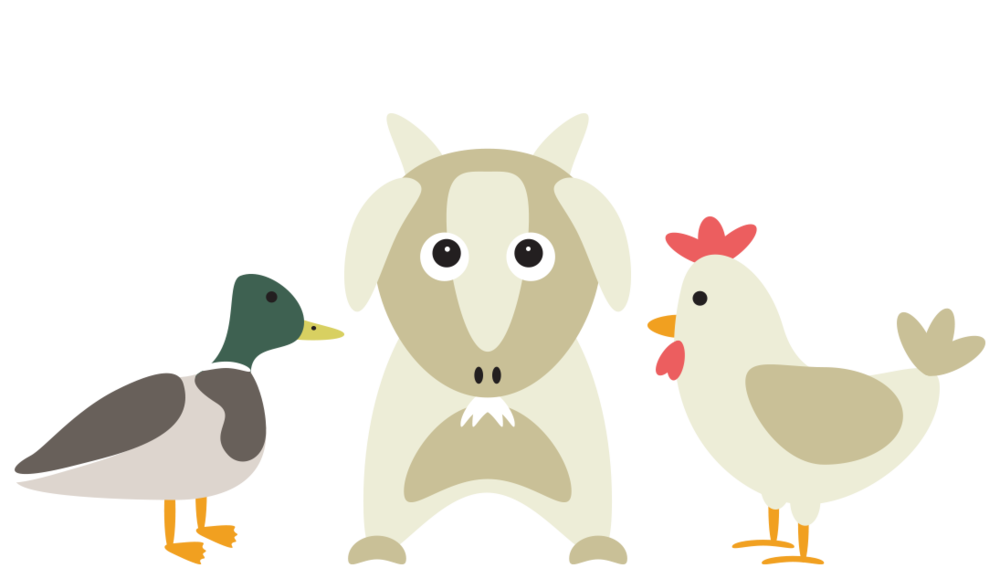 duck-chicken-feed-website-icon.png