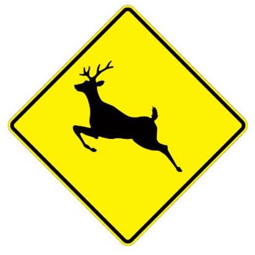 Beware of deer
