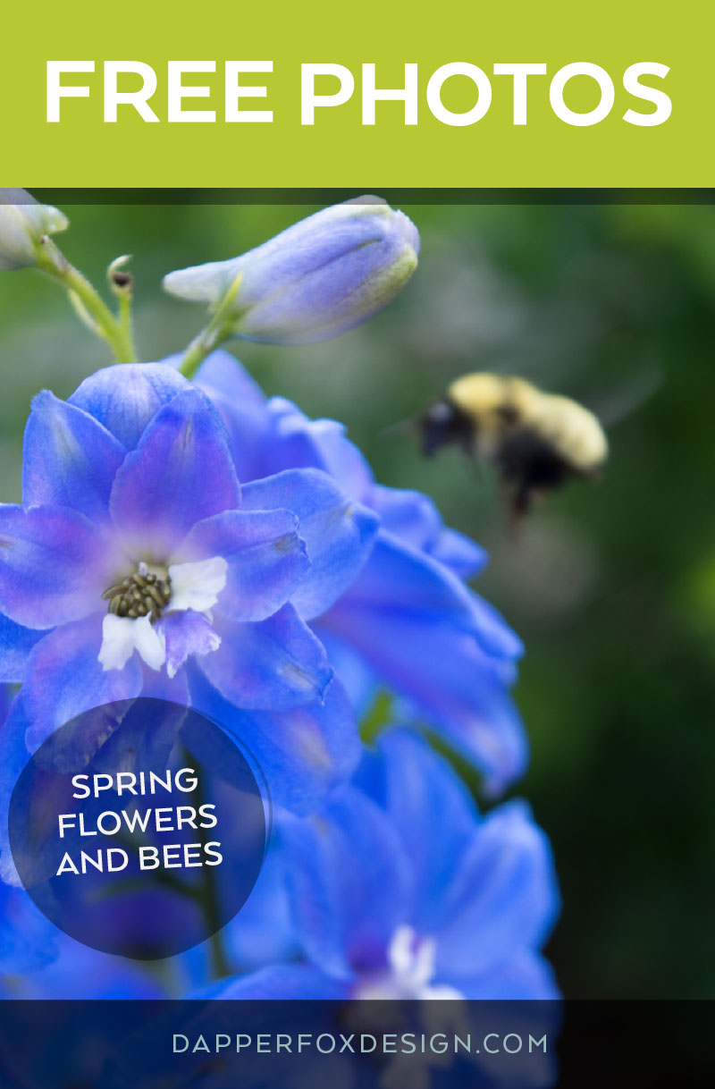 FREEBIE FRIDAY | Free Photos - Save the Bees + Spring Blue and Purple Flowers Photo Pack by Dapper Fox Design. Royalty Free for personal and commercial use. #springflowers #freephoto #photography #freephotos #blogphotos #flowerphotos #beephotos