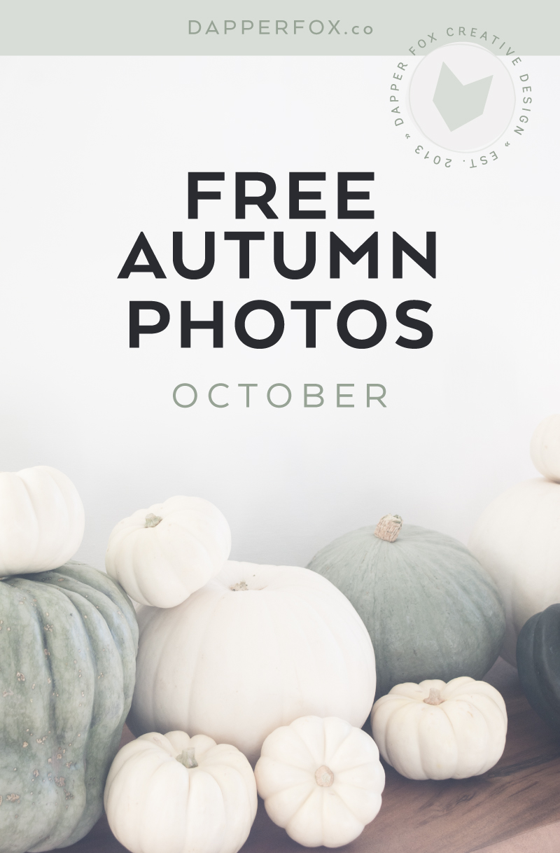 Free Autumn and Halloween White Pumpkin Photos by Dapper fox