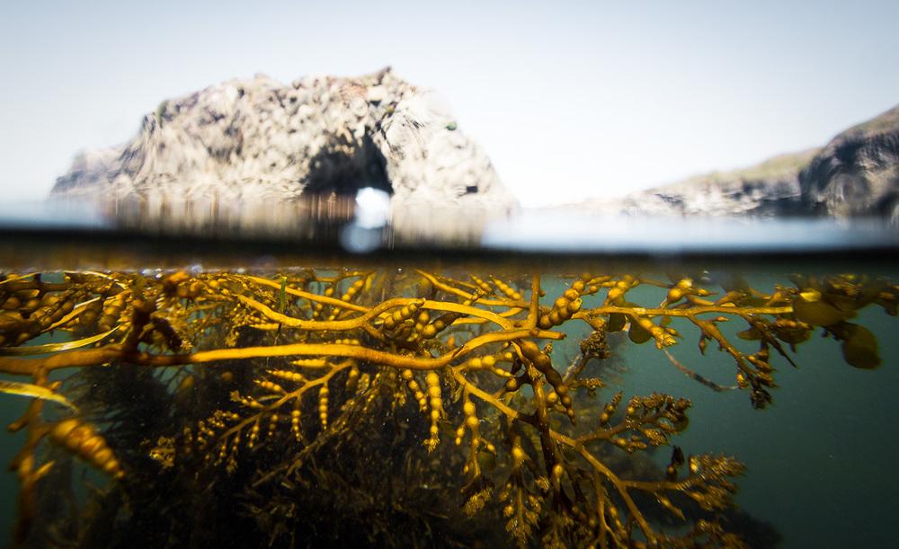 mendocino_headlands_seaweed_schedler.jpg