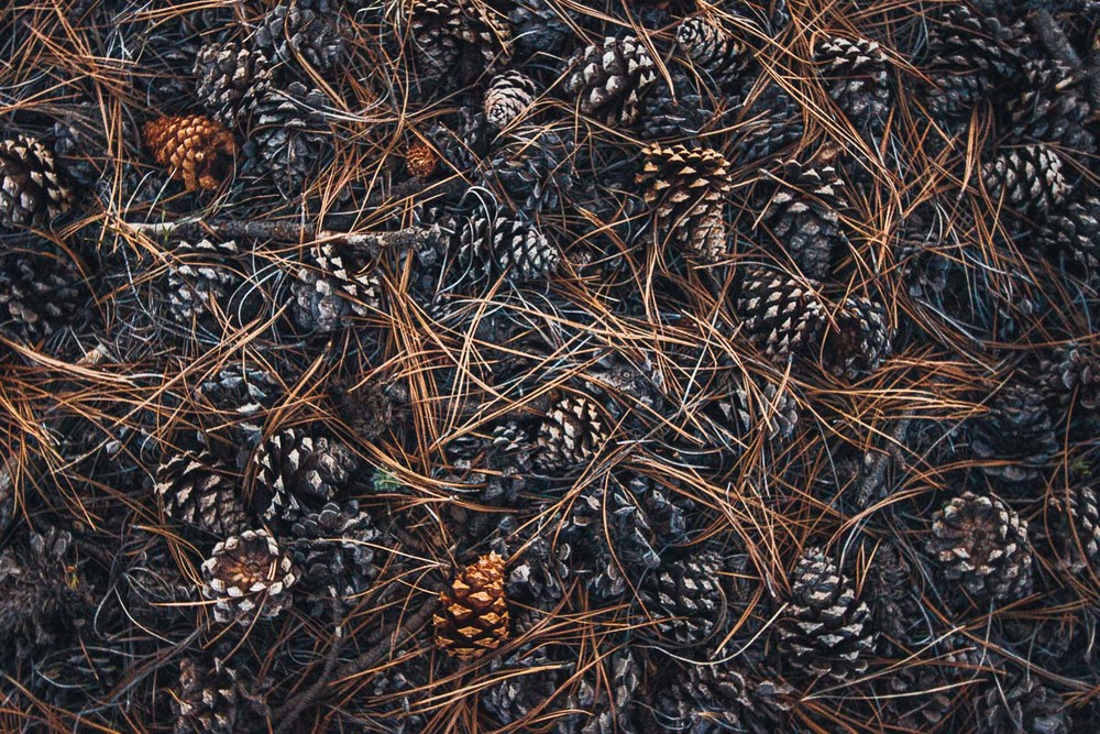 forest_floor_litter_pinecone_schedler.jpg