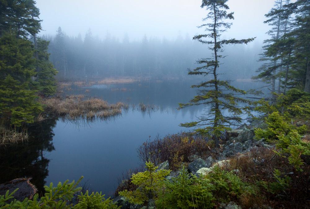 acadia_fog_beaverPond_morning.jpg