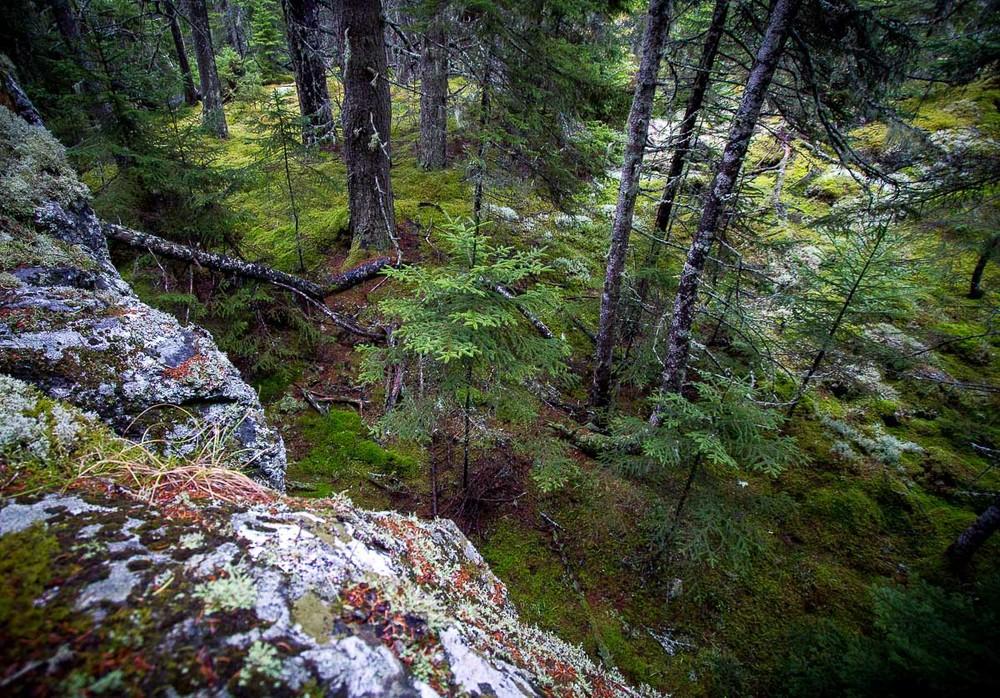 acadia_schoodic_hike_forest.jpg