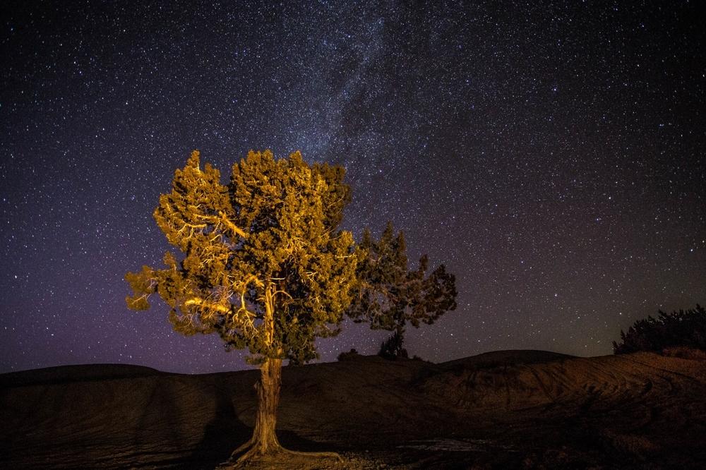 Juniper tree at Little Sahara.Photo: Dean Chytraus