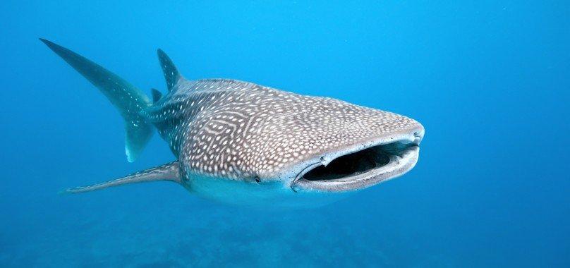 THISWORLDEXISTS Whale Shark Volunteer Adventure Travel Mexico
