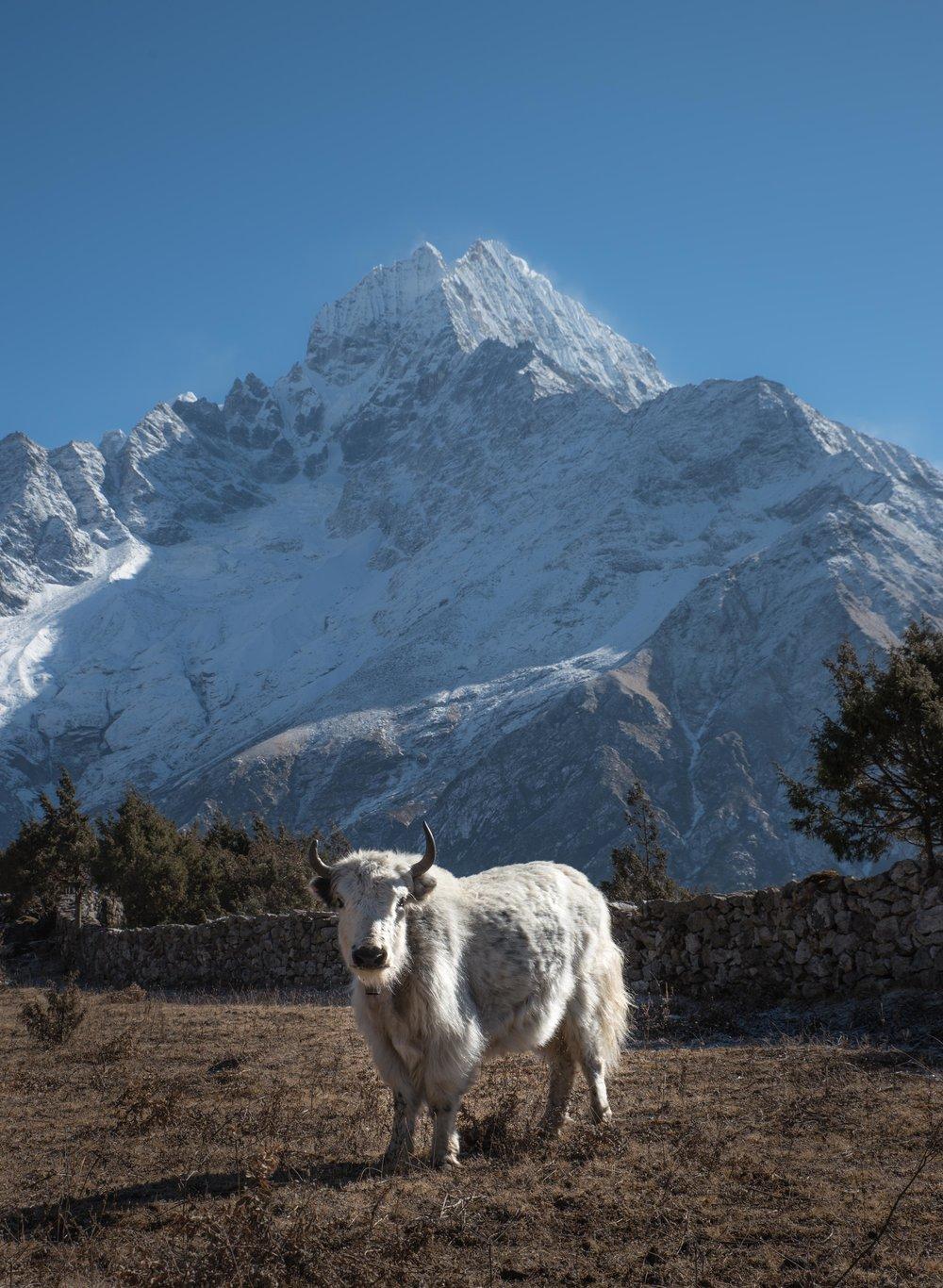 Nepal2017-44.jpg