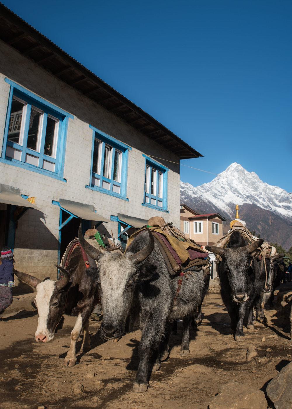 Nepal2017-57.jpg