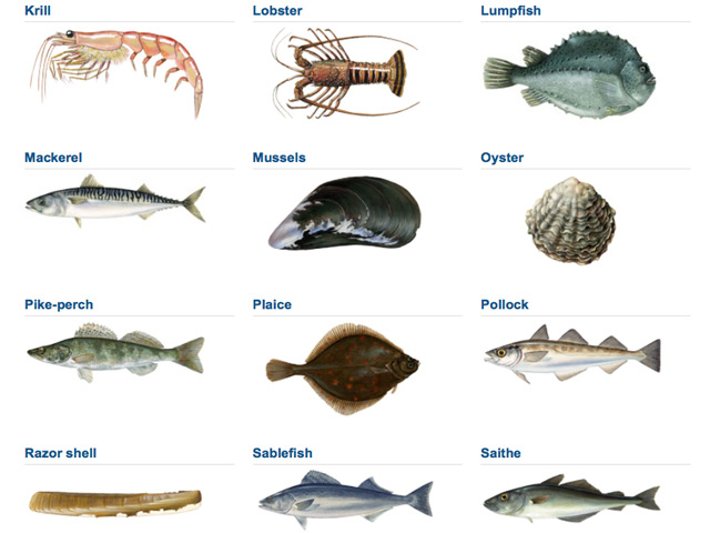 Best fish to eat best fish 2017 for What is the best fish to eat