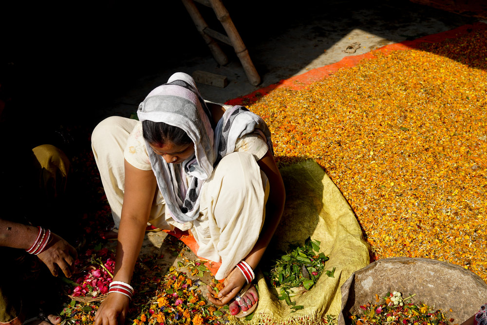 While a woman sorts through fresh waste flowers, a previously sorted pile dries in the sun behind. Once the flowers are dried they are ground into a flower-powder that can be used to make bio-materials.